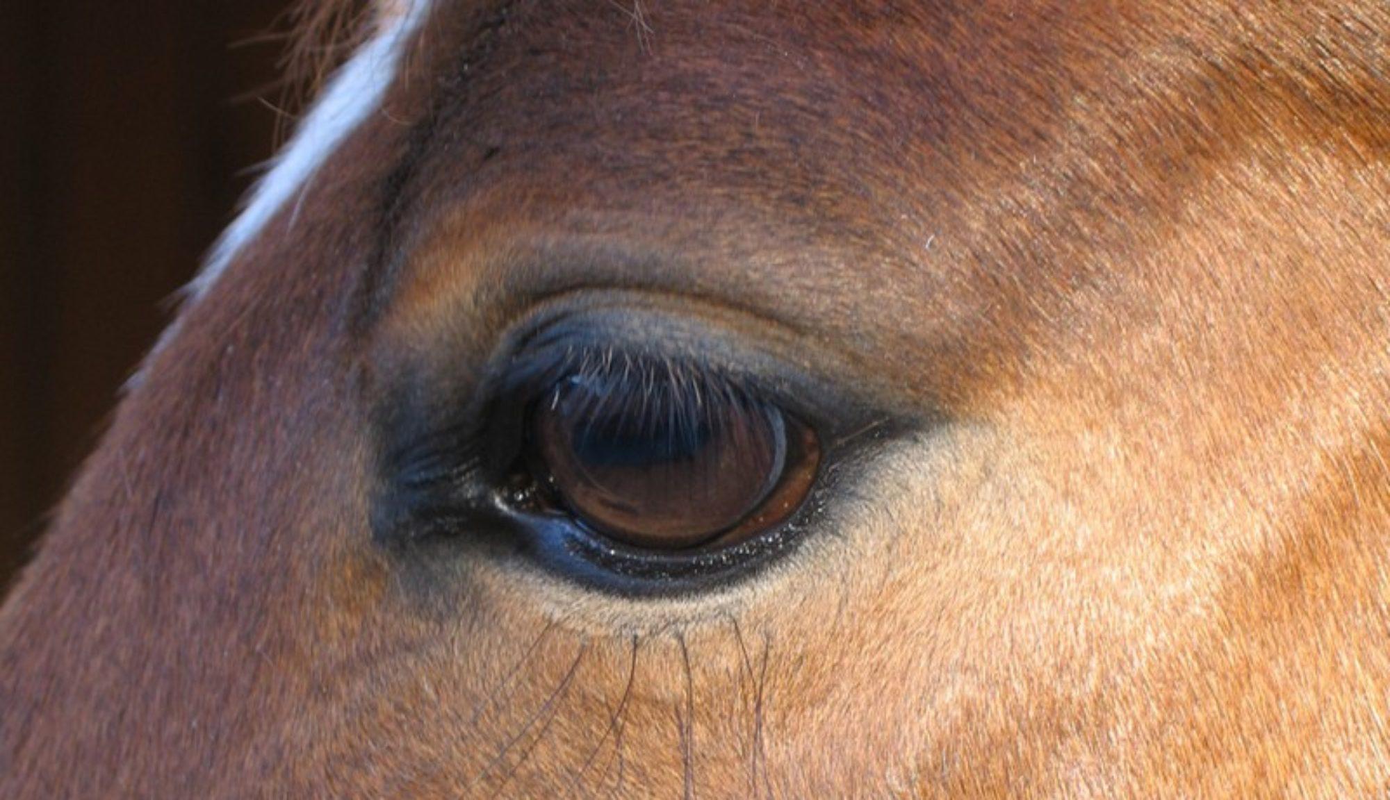 MaLi-Horse